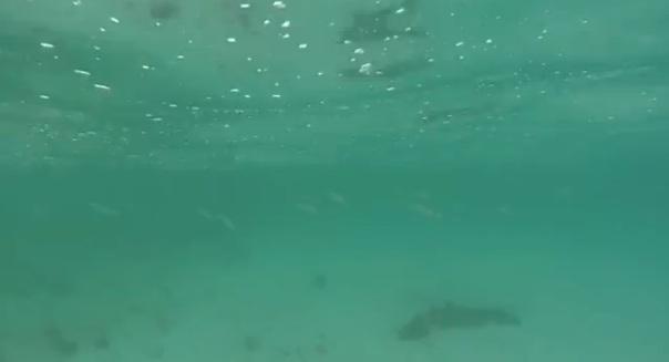 clearishwithfish