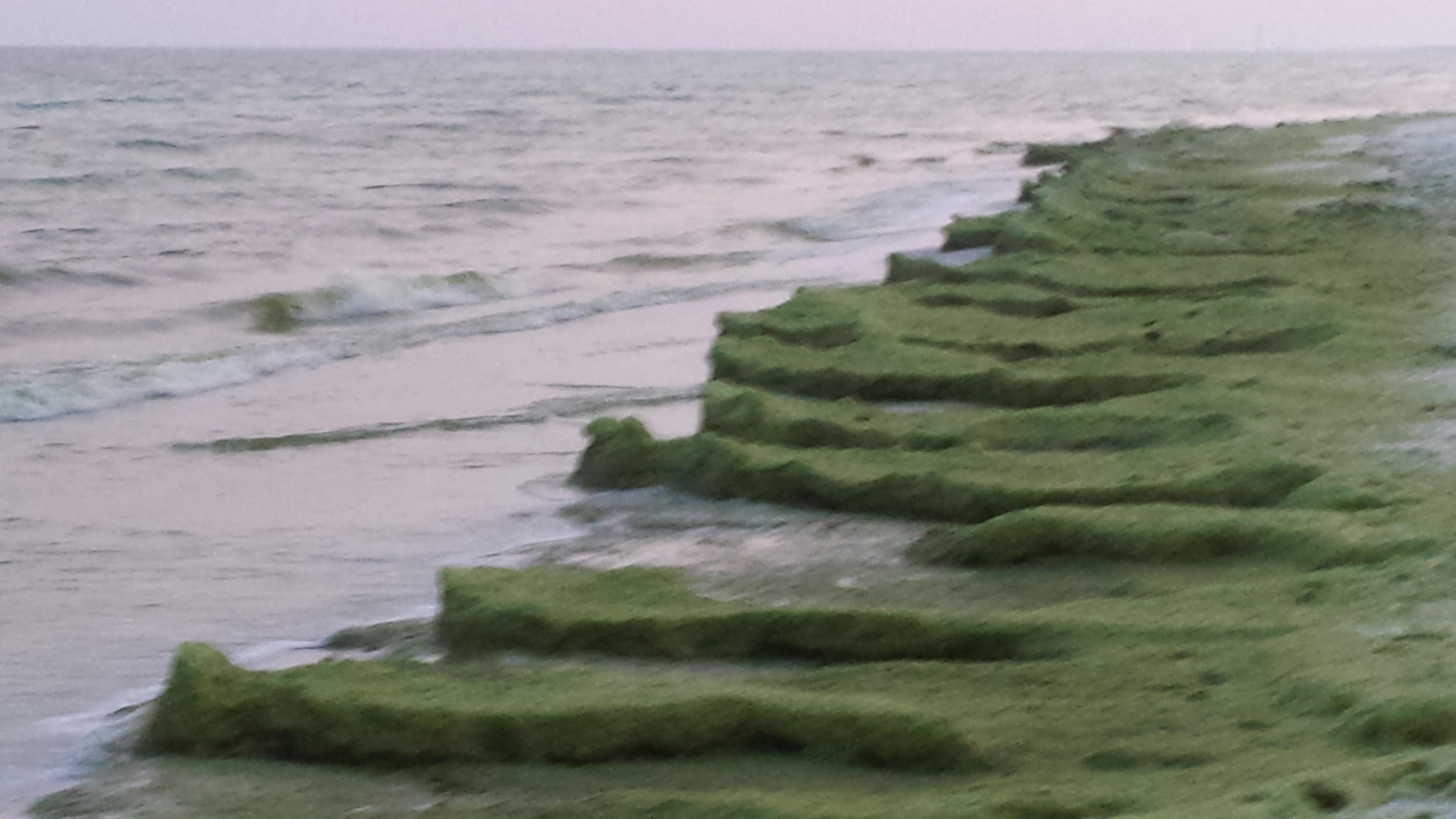 The June Grass Report   Crowdsourced June Grass and Beach Updates